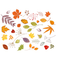 Autumnal leaves and plants vector image vector image