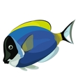 Blue tropical fish on a white background vector image vector image