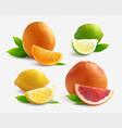 citrus transparent set vector image