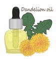 dandelion essential oil vector image
