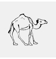 Hand-drawn pencil graphics camel Engraving stencil vector image