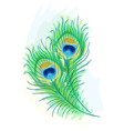 peacock watercolor style vector image vector image
