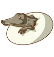 alligator hatching from an egg on white background vector image vector image