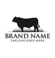 angus cow logo vector image vector image