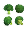 broccoli icon set realistic style vector image