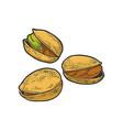 pistachio nut sketch vector image vector image