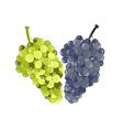 Realistic grapes isolated on white background vector image vector image