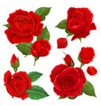 realistic rose flower icon set vector image