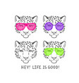 sketch head of leopard in pink club glasses vector image