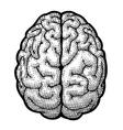 Digital brain vector image vector image
