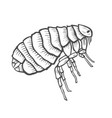 flea insect parasite vector image vector image