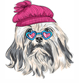funny cartoon hipster Lowchen dog vector image vector image