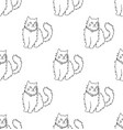 white persian cat on white background vector image vector image