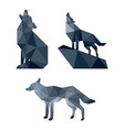 wolf low poly design vector image