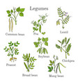 hand drawn set of culinary agricultural legume vector image vector image