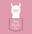 happy valentines day alpaca llama face sitting in vector image