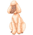 poodle dog with white fur vector image vector image