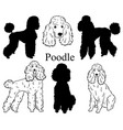 poodle set collection pedigree dogs black vector image vector image