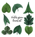 set green leaves leaves different vector image vector image