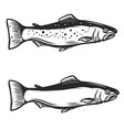 trout fish on white background vector image vector image