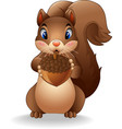 cartoon funny squirrel holding pinecone vector image vector image
