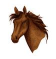 horse animal muzzle sport racehorse icon vector image vector image