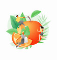 orange fruit and tiny people vector image