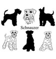 schnauzer set collection pedigree dogs black vector image