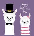 happy valentines day llama alpaca animal set love vector image