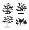 isolated object of greenhouse and plant logo vector image