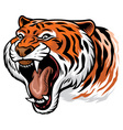 roaring angry tiger vector image