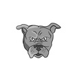 Angry Bulldog Head Cartoon vector image