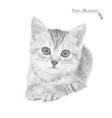 cat in black and white graphic vector image vector image