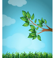 Scene with branch and grass vector image vector image
