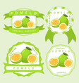 the theme pomelo vector image vector image