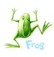 green frog painted in engraving style vector image vector image