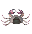 Field Crab Isolated on A White Background vector image vector image