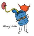 metaphor function of urinary bladder vector image