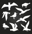 white birds silhouette on chalkboard - flying vector image vector image