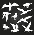 white birds silhouette on chalkboard - flying vector image
