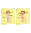 Anatomy of boy and girl vector image vector image