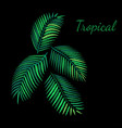 embroidery tropical vector image