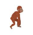 ape monkey animal progress biology human vector image vector image