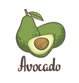 Avocado half of avocado avocado seed Hand drawn vector image vector image