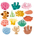 coral sea coralline or exotic cooralreef vector image