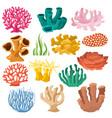 coral sea coralline or exotic cooralreef vector image