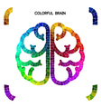 Creative colorful left brain and right brain vector image