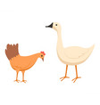 goose and chick at farm agriculture farming vector image vector image