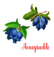 honeysuckle seed fruits isolated icon vector image vector image