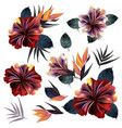 set tropical hibiscus flowers with palm vector image